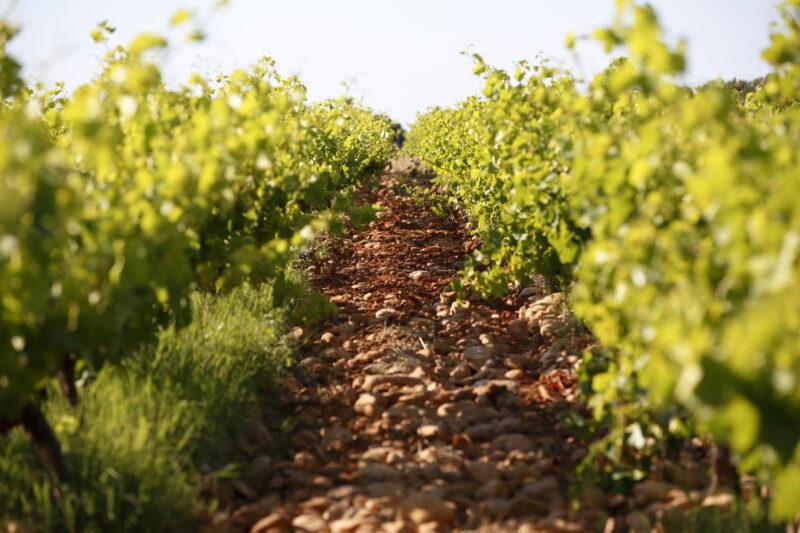 Maby vins respect éxigence